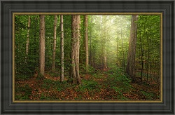 The Sacred Grove - Framed
